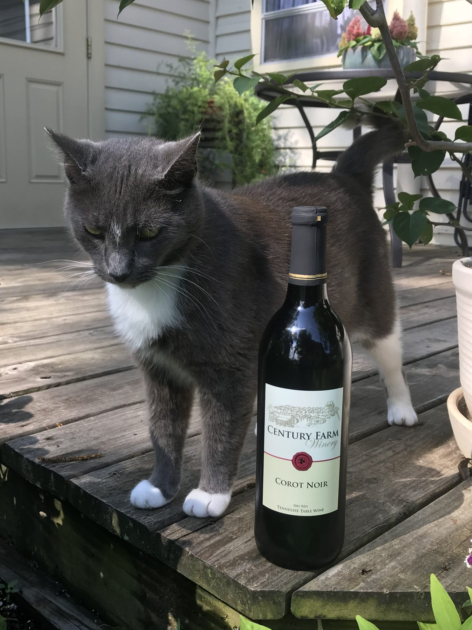 Corot Noir – July 2018 Wine of the Month